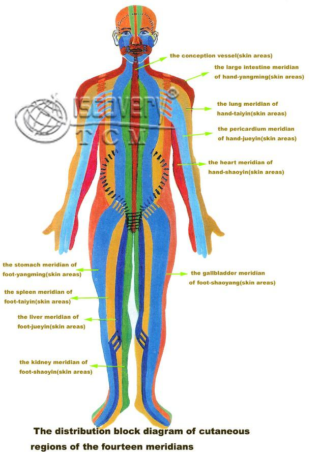 Figure 1 Acupuncture Meridian (Source from www.pintrest.com)